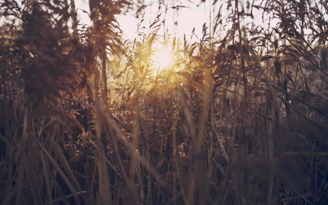 What You Need to Sow for Faith to Grow