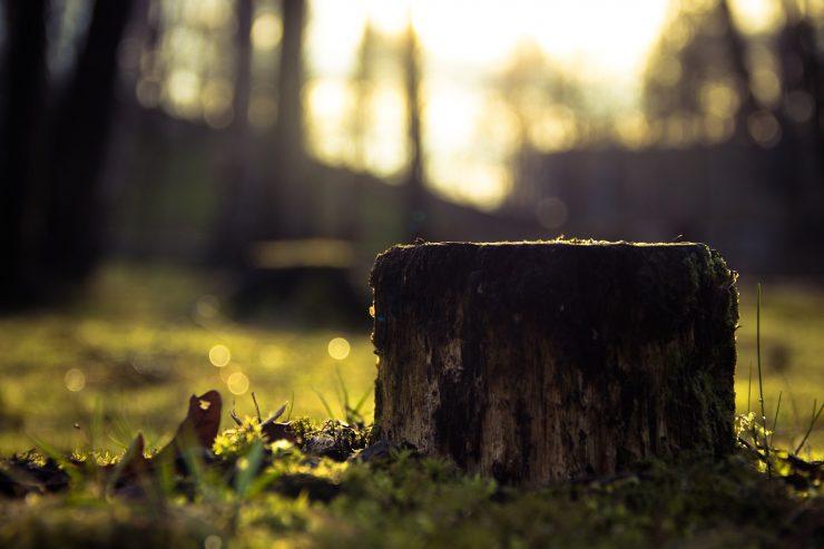 The Giving Tree Teaches Unhealthy Self-Denial